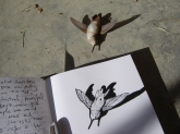 hummingdead
