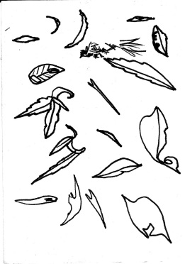 leaves and lips