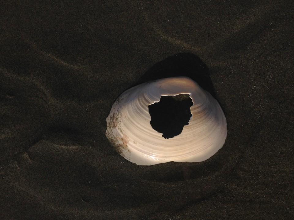 shellbang