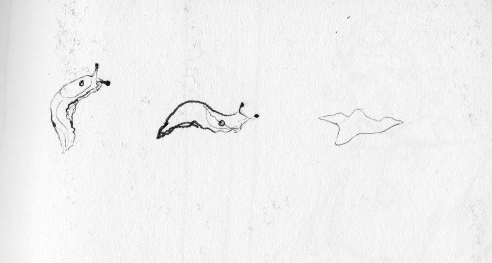 slugscan