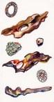 haida-gwaii-items