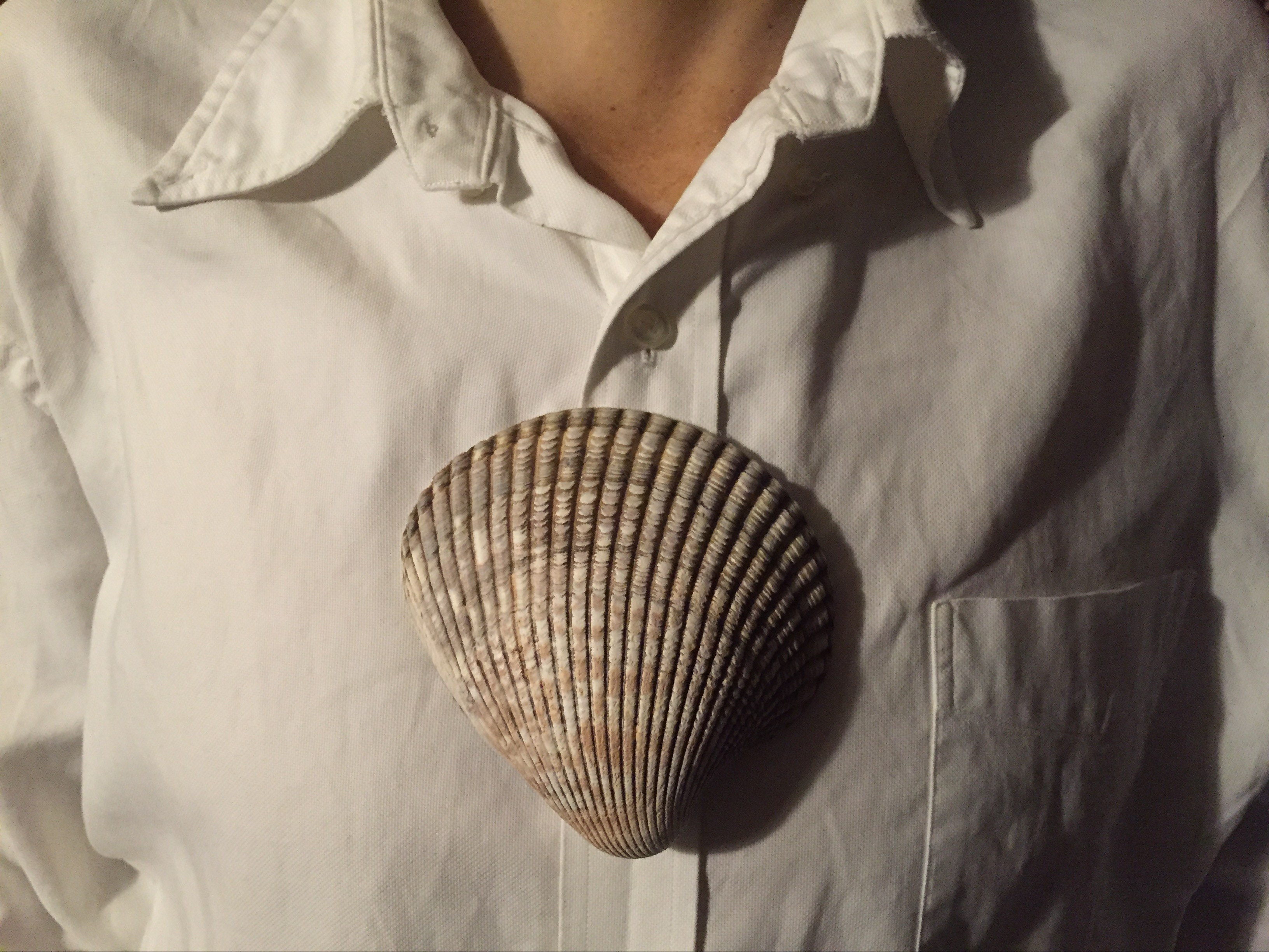 shell chest